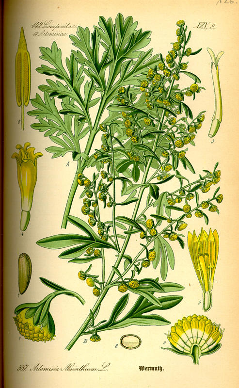 Artemisia: Plant of Many Moons – Ayala Moriel Parfums