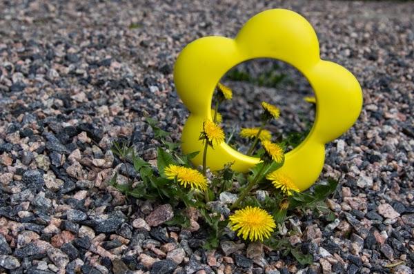PauMau 40+ nelkytplus blogi kukkapeili 70-luku voikukka keltainen kukka valokuvaus 70's mirror plastic yellow flower photography