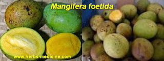 Beauty tips for girl use furit mango