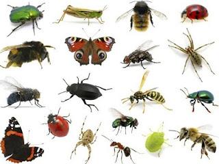 اسماء الحشرات بالانجليزى