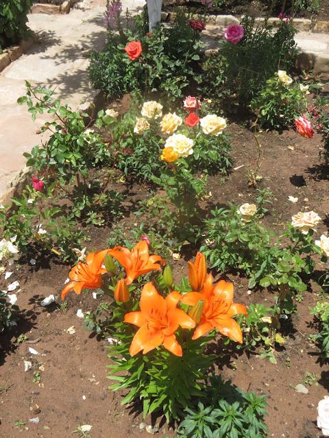 Rosen und Lilien blühen in voller Pracht und das auf 3500 m Höhe