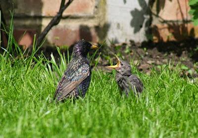 fotografia del reino animal Pájaros