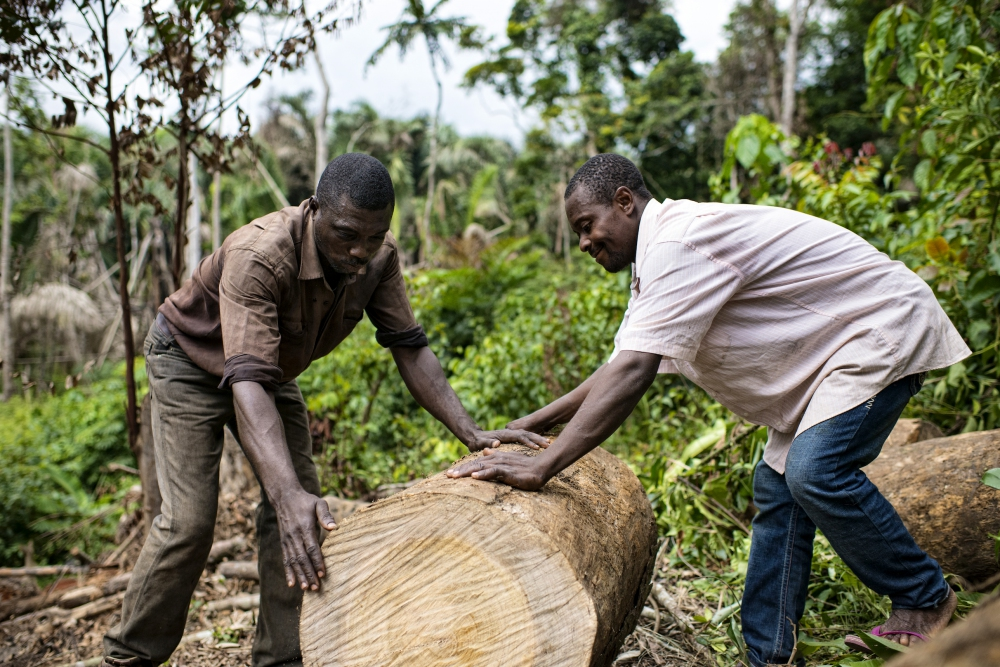 Image result for ghana wood chopping