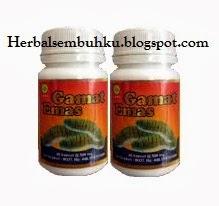 GAMAT EMAS Kapsul gamat murah Surabaya | 085755201000 | Jual kapsul gamat emas herbal insani murah Surabaya