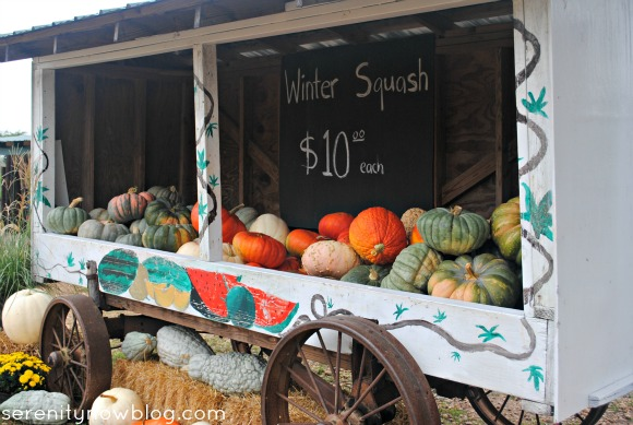 Fall Pumpkin Patch Pictures, Serenity Now blog