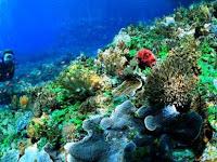 Taman Laut Taka Bonerate, Surga Bawah Laut bagi Para Pecinta Diving