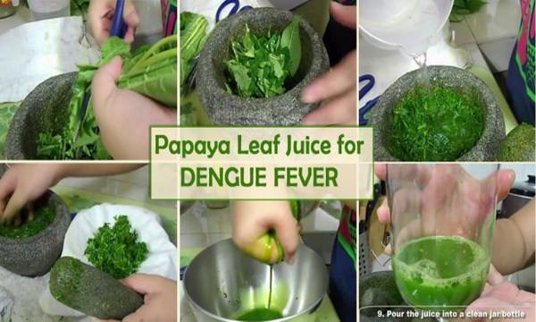 How to Use Papaya Leaf Juice To Treat Dengue Fever In 48 Hours