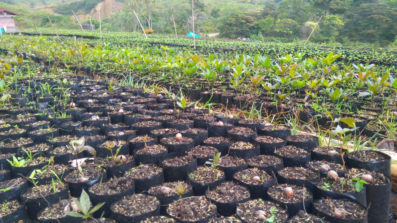 Vivero guacas pl ntulas para cuencas pescador for Viveros zona norte