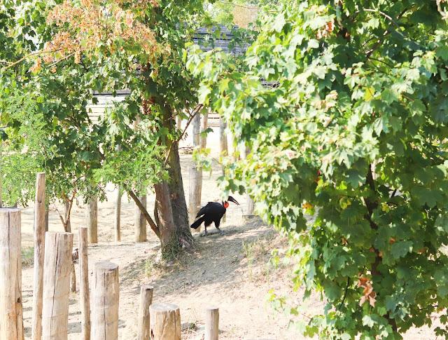 animaux zoo de vincennes