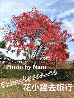 大阪城公園紅葉