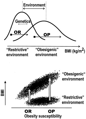 environmental points factor throughout over weight increasing incidence essay