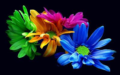 Gambar Bunga Daisy
