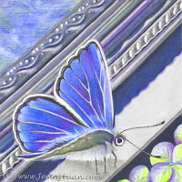 Blue Butterfly Frame by JennyLuan