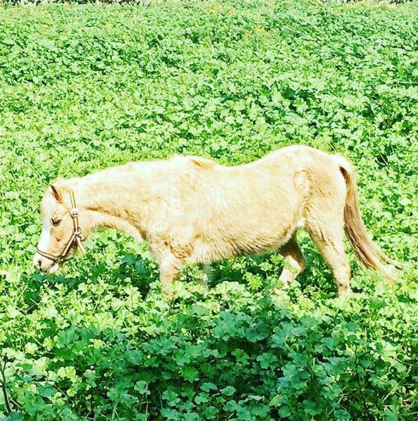 סוס לידי הארנב הלבן - מחסן תחפושות