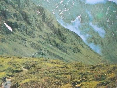 Foto Anggrek kerdil di Pegunungan Himalaya Nepal