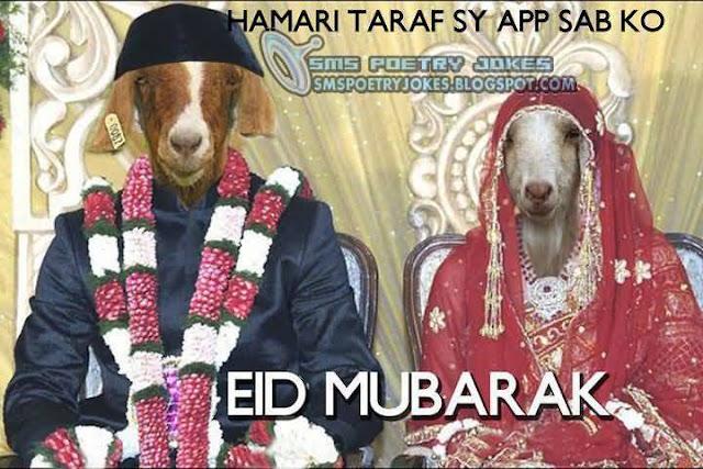 Funny Bakra Eid Images
