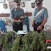 Rutigliano (Ba). Arrestato dai carabinieri un 42/enne dal pollice verde. Nel terrazzo aveva allestito una serra per la coltivazione di marijuana [CRONACA DEI CC. ALL'INTERNO]