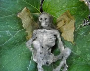 https://i2.wp.com/2.bp.blogspot.com/-9yeqmmQN1ho/UPIdCB6tcQI/AAAAAAAADIk/KesBWYMVRfg/s1600/dead+fairy+on+a+jar+was+for+sale+on+ebay.PNG