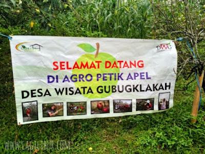 Agrowisata Petik Apel Gubugklakah Malang