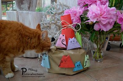 Katze Mimi beschnuppert ihre Geburstagstorte