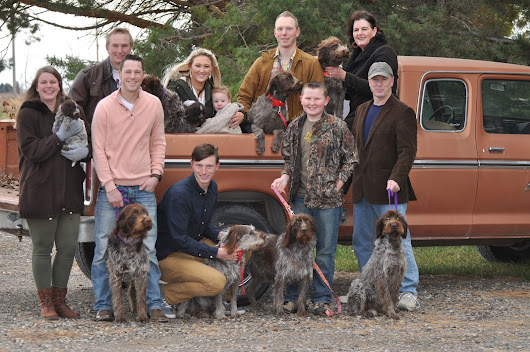 The Greatest Family Dogs ever Wirehaired Pointing Griffons