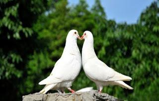tentang jatuh cinta pada manusia dimabuk jatuh cinta