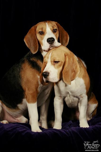 koirakuvaus, hevoskuvaus, kissakuvaus, lemmikkikuvaus, valokuvaus, eläinkuvaus, koirakuvaaja