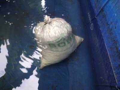 pembesaran ikan lele modern di kolam terpal