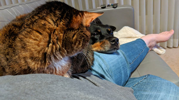image of Sophie the Torbie Cat sitting on my hip as I'm outstretched on the sofa, with Zelda sitting behind my legs, resting her chin on my thigh; Sophie has her head turned, looking at Zelda