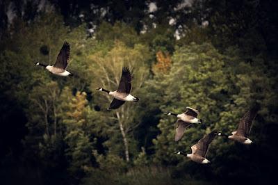 Vögel, Herbst, Herbststimmung