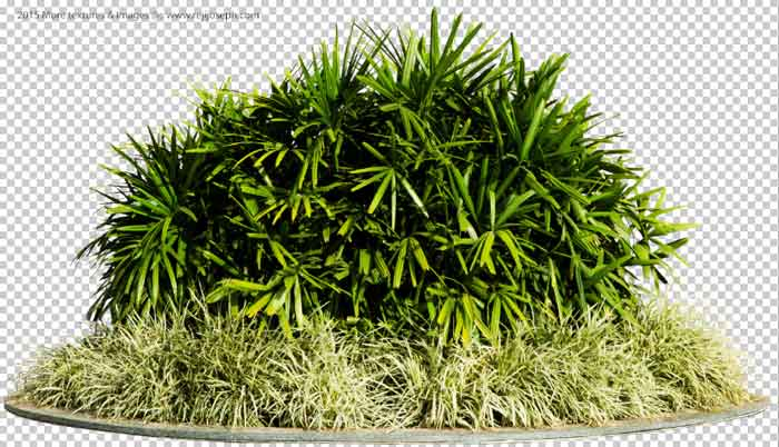 PNG Ground Rattan Plant 00001