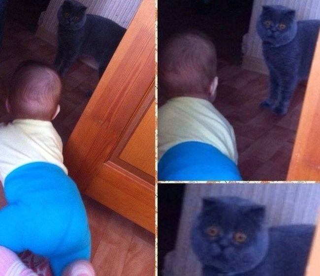 Funny cats - part 246, funny cat pictures and gifs, best cat picture and gif
