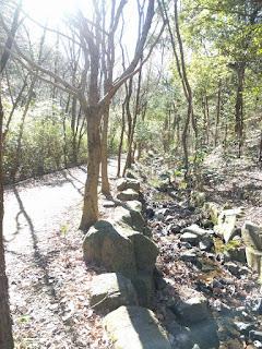 森の小道と小川