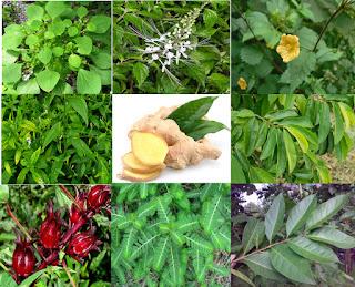 Obat Asam Urat Alami dari Tumbuhan dan Cara Membuatnya