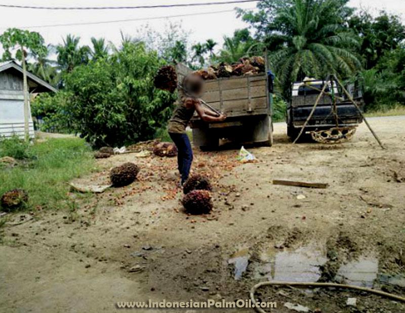 program kelapa sawit berkelanjutan indonesia