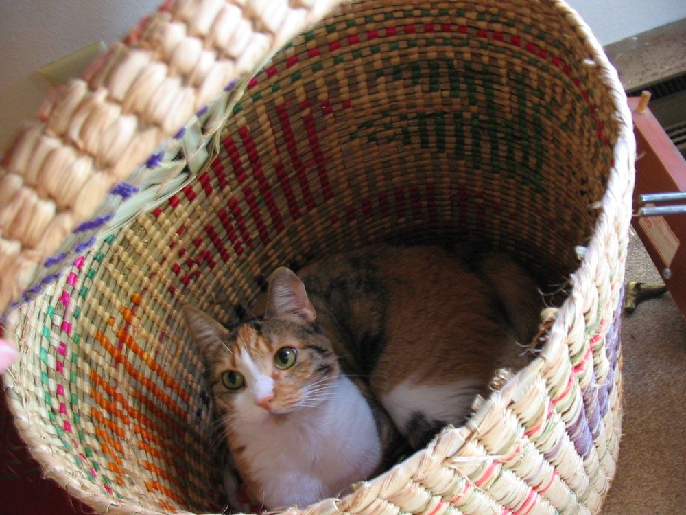 kitty in a basket by malisonian