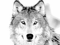Wolf Puzzle Game