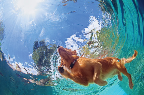 underwater shot of dog swimming in pool