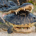 See what the crocodile did with the tortoise You will be surprised to see