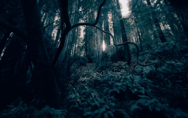 MasyaAllah, Ternyata di Kehidupan Ini Terdapat Pohon Tauhid dan Pohon Syirik