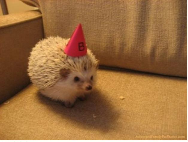 animals wearing birthday hats - photo #20