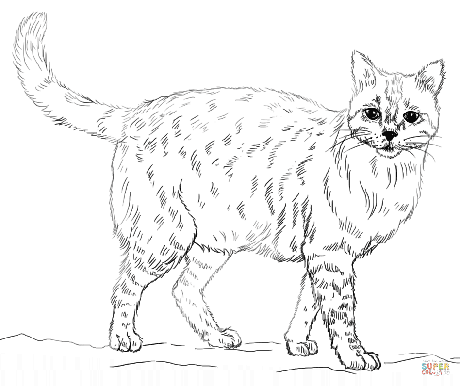 Top 12 Laughable CAT Coloring Pages Impossible Not To