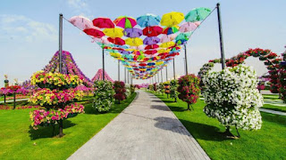 The-Worlds-Biggest-Natural-Flower-Garden
