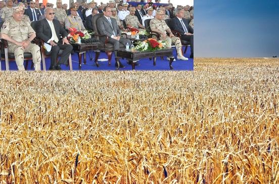 «السيسى» يشهد حصاد 7 آلاف فدان قمح بمشروع الـ 1.5 مليون فدان فى الفرافرة