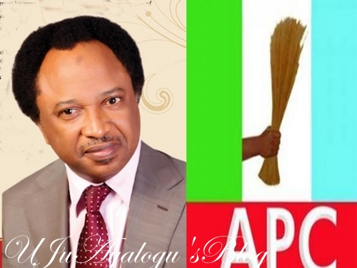 10 Factors Working Against Nigeria's Unity - Senator Shehu Sani