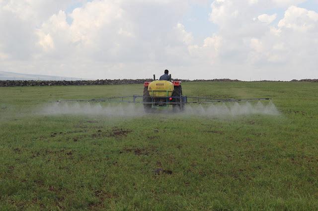 DİYARBAKIR-Pirinç ekimi için hazırlık yapan Diyarbakırlı çiftçiler, tarlalarındaki yabani otların yok olması amacıyla zirai ilaçlama yapıyor.