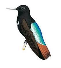 aves endemicas de bolivia