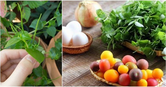 Rau càng cua tốt cho tim mạch và huyết áp nên có thể góp phần chữa bệnh đái tháo đường,táo bón, cao huyết áp…