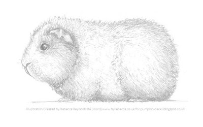 Illustration Rex Guinea Pig Rebecca Reynolds BA Hons