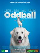 Chú chó Oddball